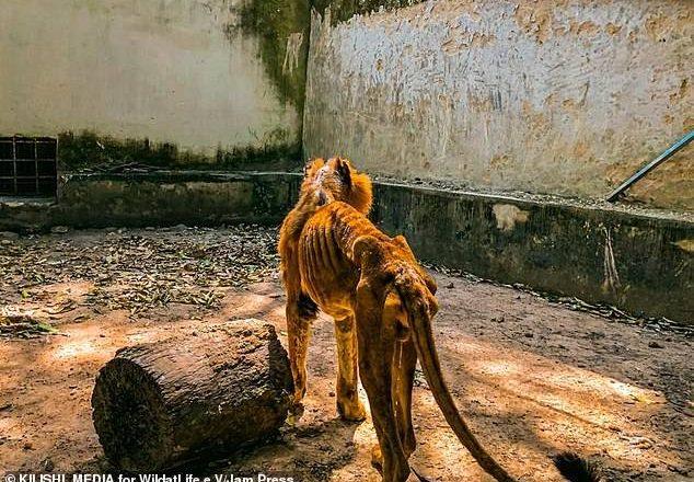 Hotunan mayunwancin Zaki a gidan Zoo din Kaduna ya jawo cece-kuce sosai