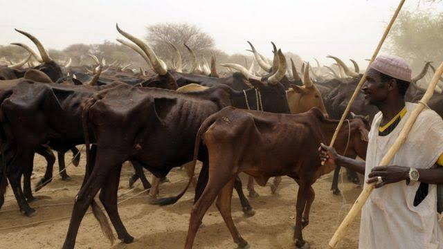 Mun fara komawa jihar Kano>>Fulani makiyaya